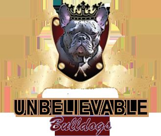 Frenchie Puppies English Bulldog Atlanta Unbelievable Bulldogs